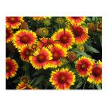 Fiery Flowers Floral Photo Postcard
