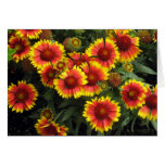 Fiery Flowers Floral Picture Blank Card