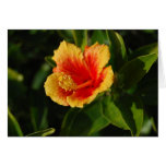 Fiery Hibiscus Happy Birthday Card