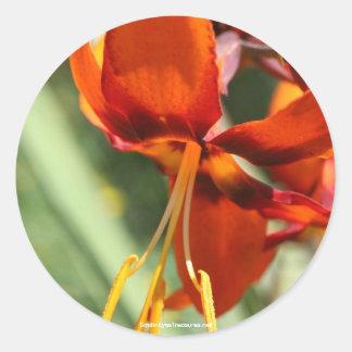 Fiery Orange Lily Flower Photo Sticker Label