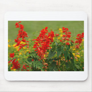 Fiery Red Hot Sally Salvia Flower Garden Mouse Pad