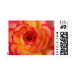 Fiery Rose Stamps