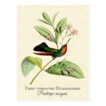 Fiery Throated Hummingbird Art Postcard