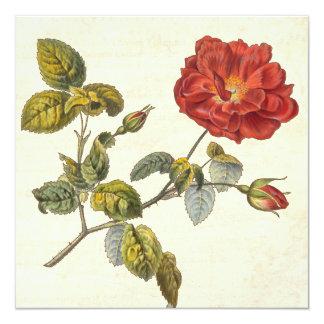 Fiesta de jardín botánica subió vintage del anuncio