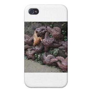 Fiesta de la estrella de mar iPhone 4 funda