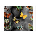 fiesta de la mariposa tarjetas postales