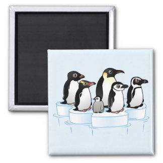 Fiesta del pingüino imán cuadrado