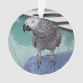 Fiesta en la piscina del gris africano