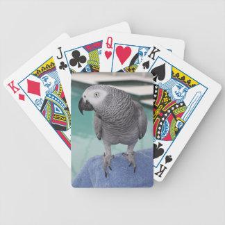 Fiesta en la piscina del gris africano barajas de cartas