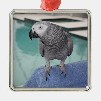 Fiesta en la piscina del gris africano adorno cuadrado plateado