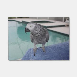 Fiesta en la piscina del gris africano notas post-it®