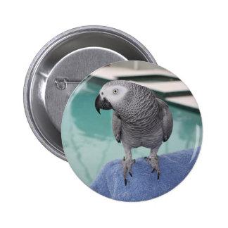 Fiesta en la piscina del gris africano pin redondo 5 cm