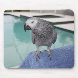 Fiesta en la piscina del gris africano tapete de ratones