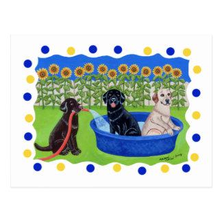 Fiesta en la piscina divertida Labradors Postal