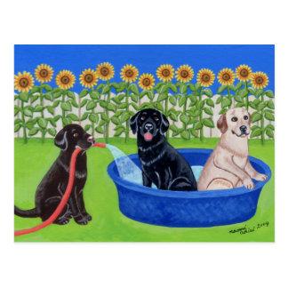 Fiesta en la piscina divertida Labradors Tarjetas Postales