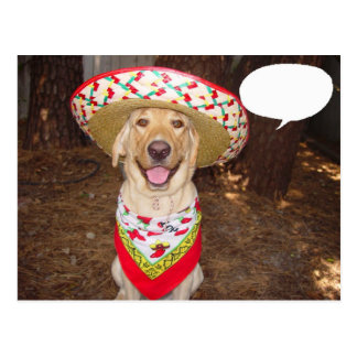 Fiesta Moses Post Cards