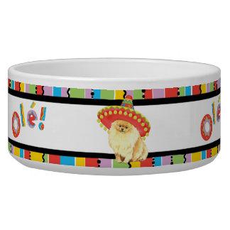 Fiesta Pomeranian Bowl