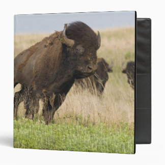 Fiesty young bison bull at the Tallgrass 3 Ring Binder