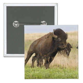 Fiesty young bison bull at the Tallgrass Pinback Button