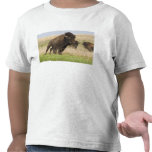 Fiesty young bison bull at the Tallgrass T Shirts