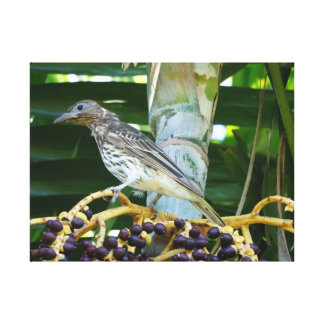 FIG BIRD RURAL QUEENSLAND AUSTRALIA CANVAS PRINT