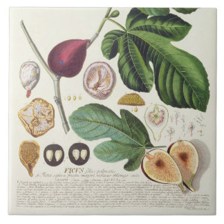 Fig, engraved by Johann Jakob Haid (1704-67) plate Ceramic Tile