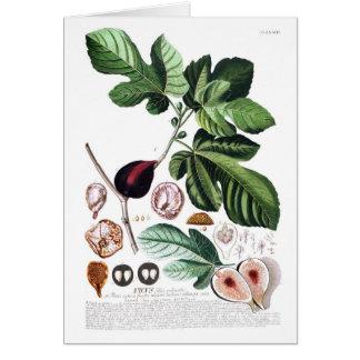 Fig Greeting Card