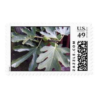 Fig Leaf Postage Stamps