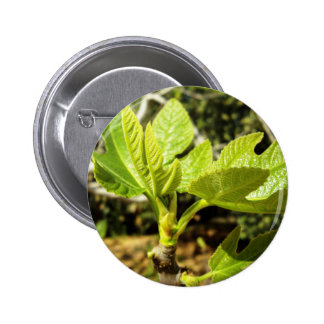 Fig Leaves Pinback Buttons