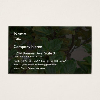 Fig Tree Business Card