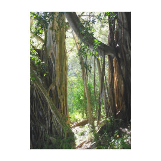Fig Tree Roots Canvas Print