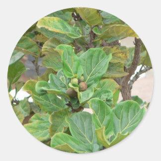 Fig Tree Round Stickers