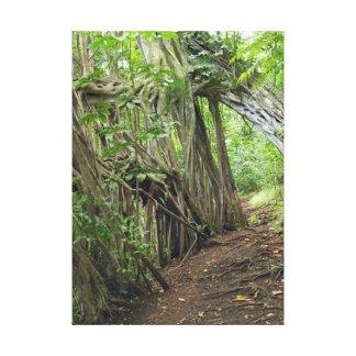 Fig Tree Trail Canvas Print