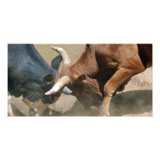 Fighting Bulls Card