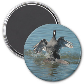 Fighting Coots Magnet