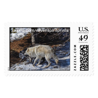 Fighting Grey Wolves Postage Stamps