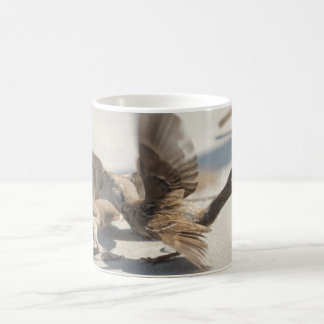 fighting sparrows coffee mug