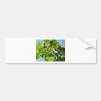 Figs on tree branches bumper sticker