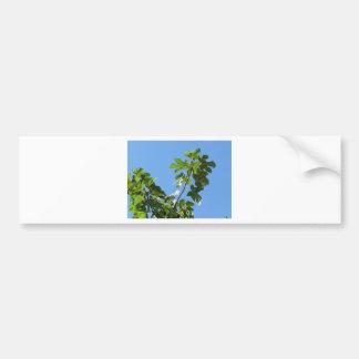 Figs on tree branches bumper sticker