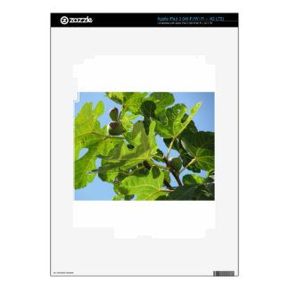 Figs on tree branches iPad 3 decals