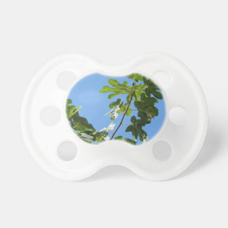 Figs on tree branches pacifier