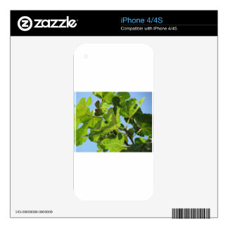 Figs on tree branches skin for iPhone 4