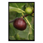 Figs! Poster
