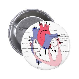 Figure 2. Normal Heart Function.jpg 2 Inch Round Button