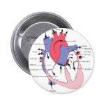 Figure 2. Normal Heart Function.jpg Pinback Button