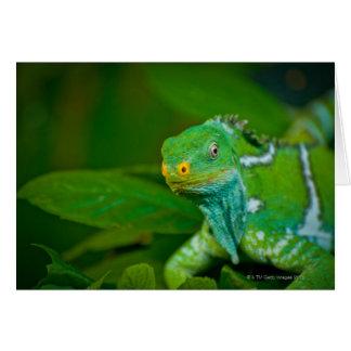 Fiji crested Iguana, Kula Eco Park, Viti Levu, Card