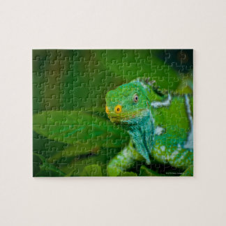 Fiji crested Iguana, Kula Eco Park, Viti Levu, Jigsaw Puzzle