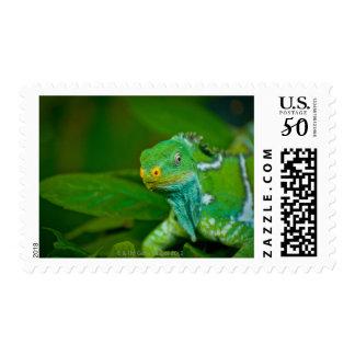 Fiji crested Iguana, Kula Eco Park, Viti Levu, Postage