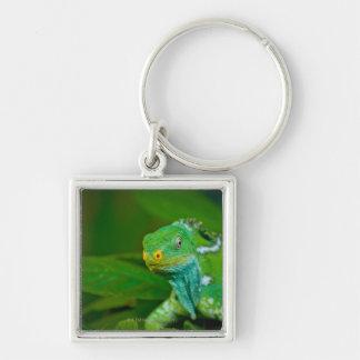 Fiji crested Iguana, Kula Eco Park, Viti Levu, Silver-Colored Square Keychain