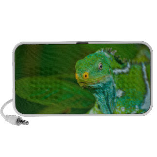 Fiji crested Iguana, Kula Eco Park, Viti Levu, iPhone Speakers